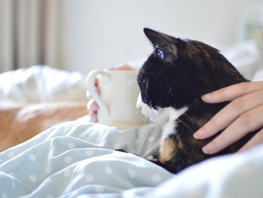 Black and white cat snuggles with his owner and a coffee mug