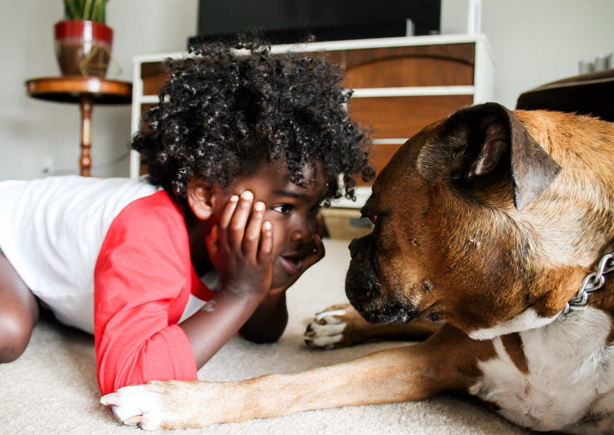 A young African-American boy in a staring contest with his pitbull
