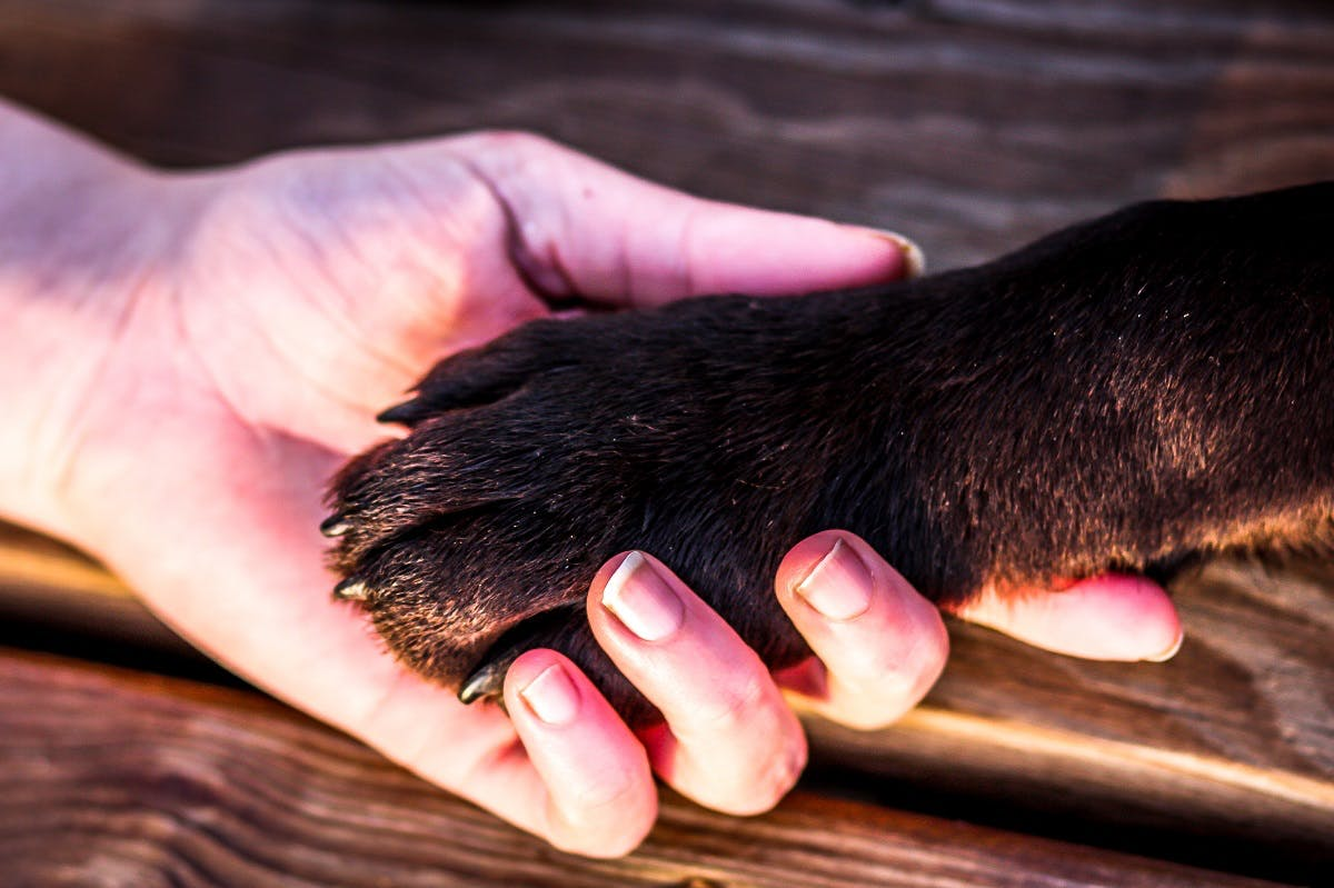 Brown dog paw in owner's hand