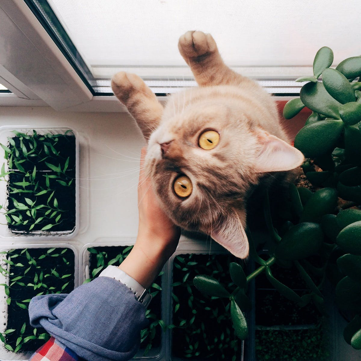 A tan cat with yellow eyes surrounded by indoor plants