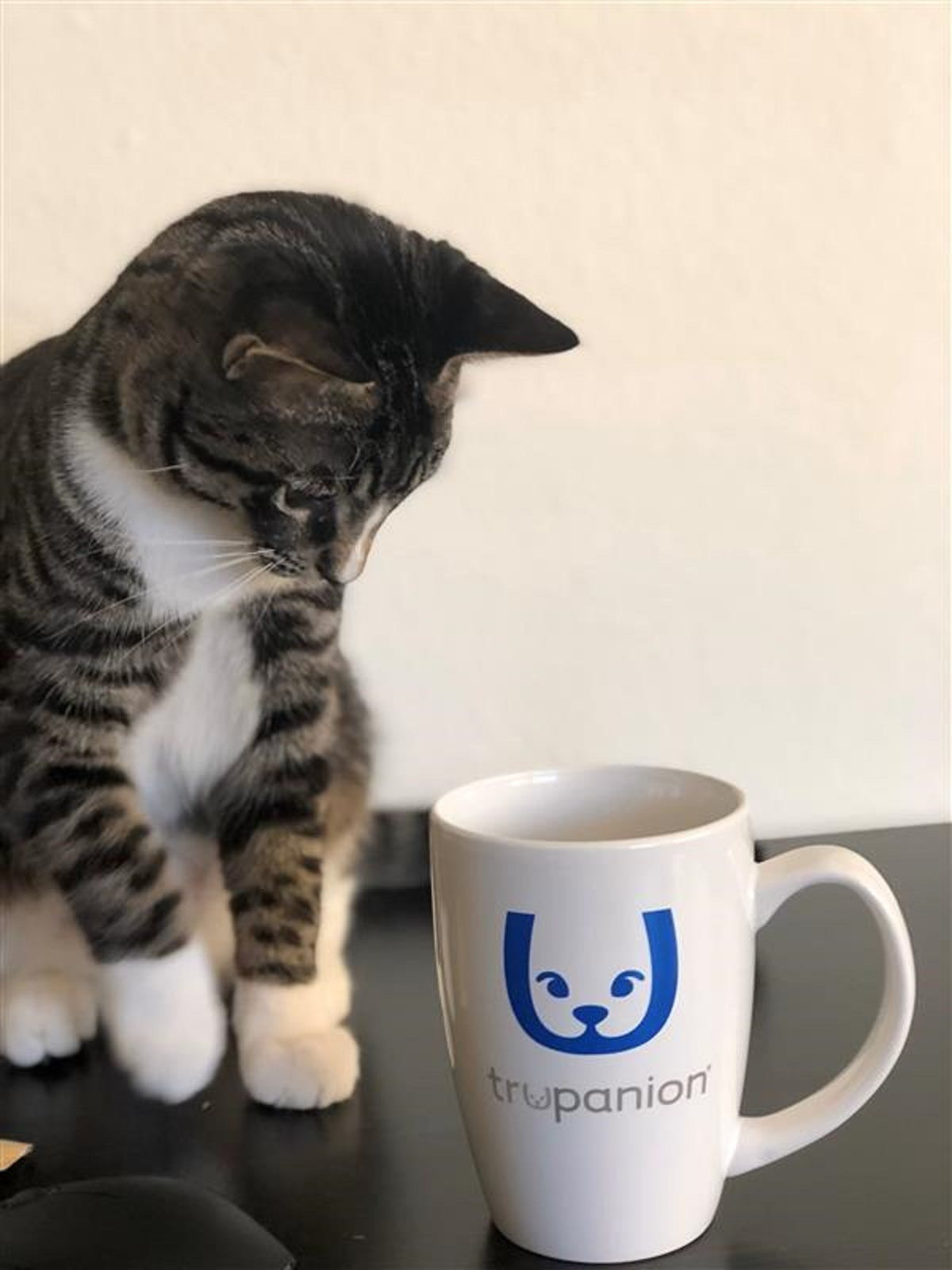Rajah the cat sits next to a Trupanion coffee mug