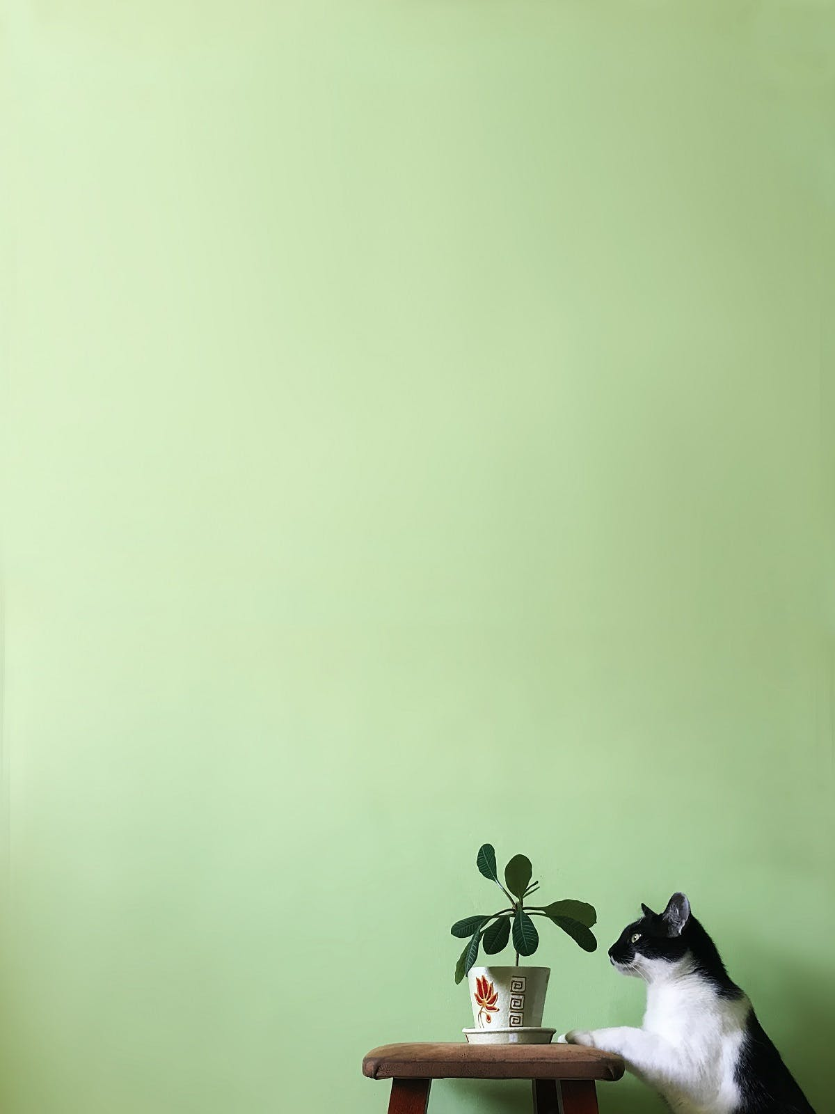 A black and white cat sniffs a potted plant against a bright green wall