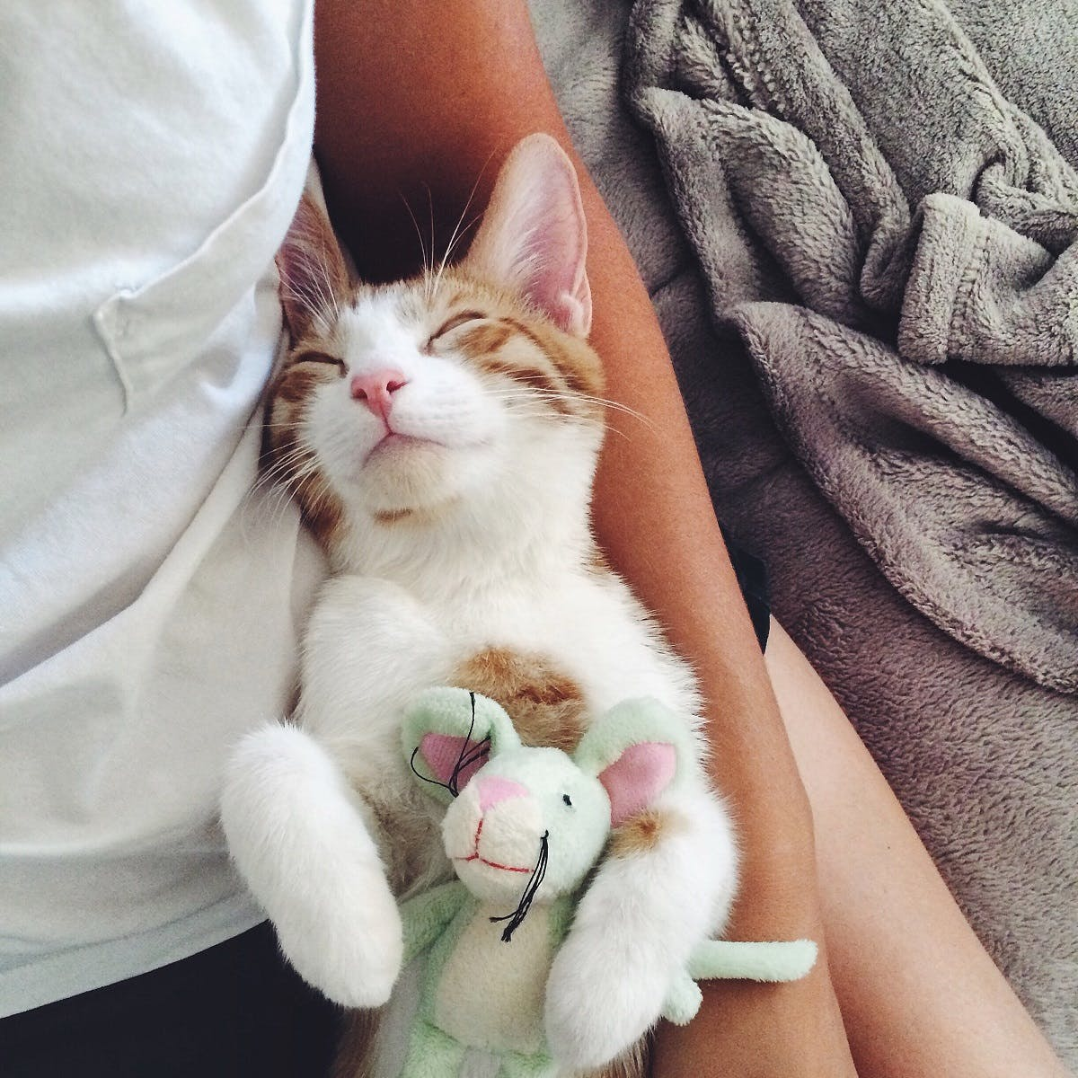 A white cat with orange ears snuggles with a stuffed animal and his owner