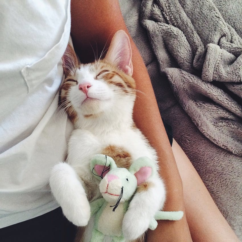 A cat snuggles with a little stuffed animal