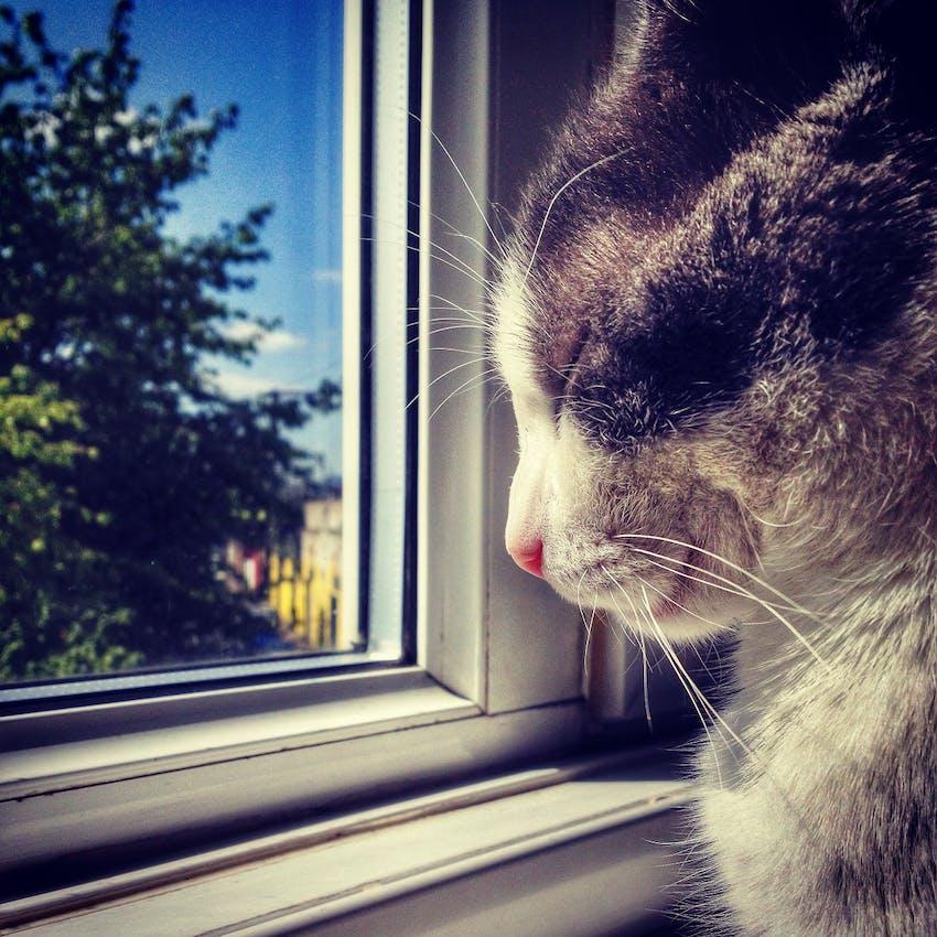Cat looking outside a sunny window
