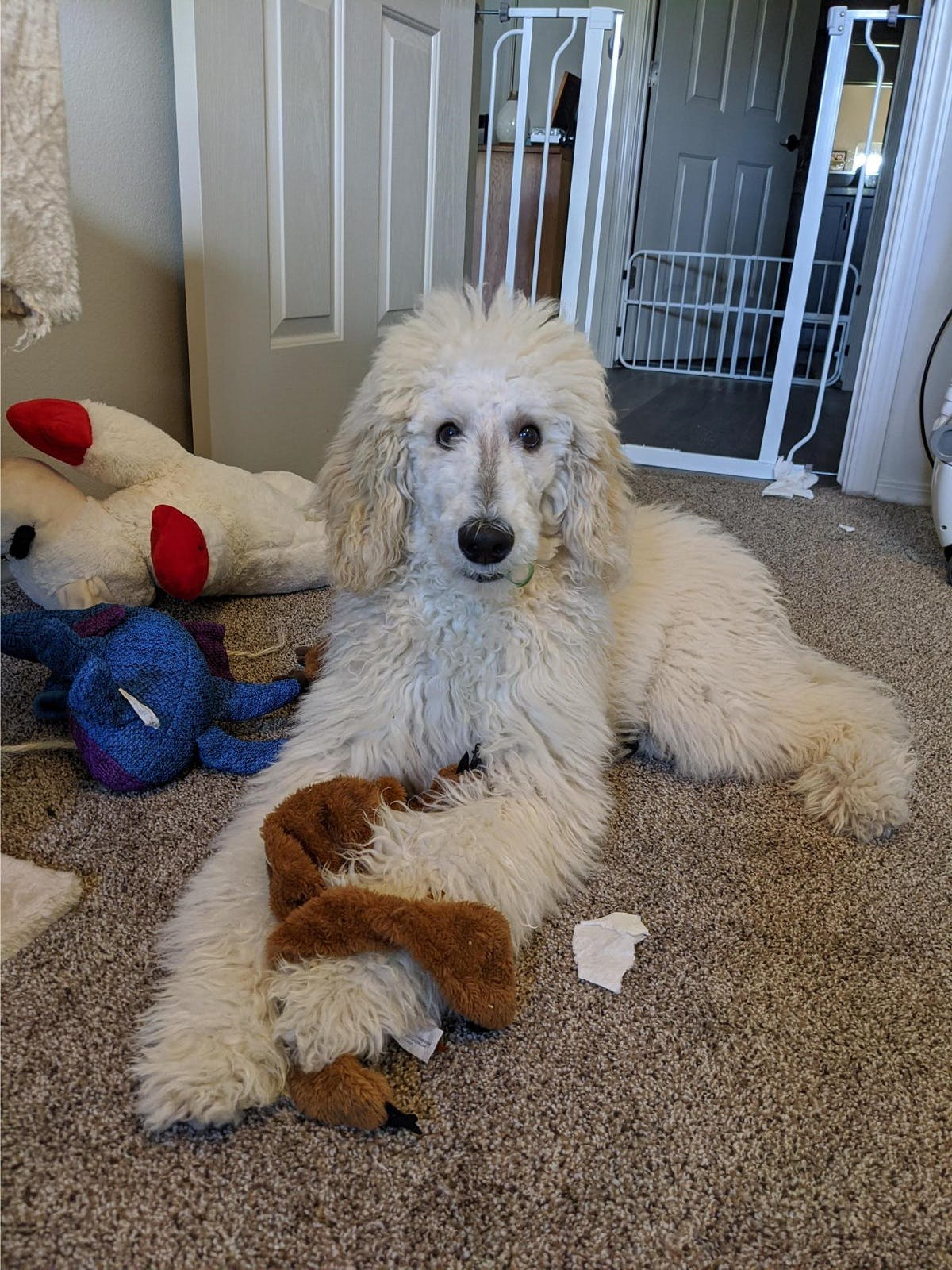 Cece the dog relaxing surrounded by toys