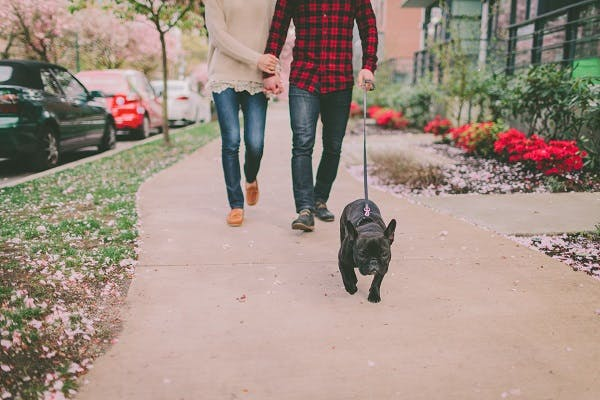 A couple walking their black French Bulldog down the sidewalk