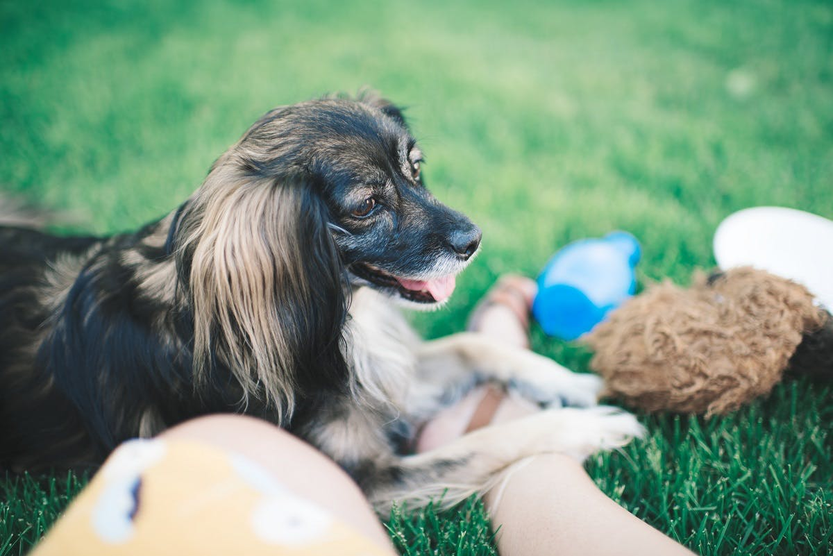 A dog sits with his owner and toys outside
