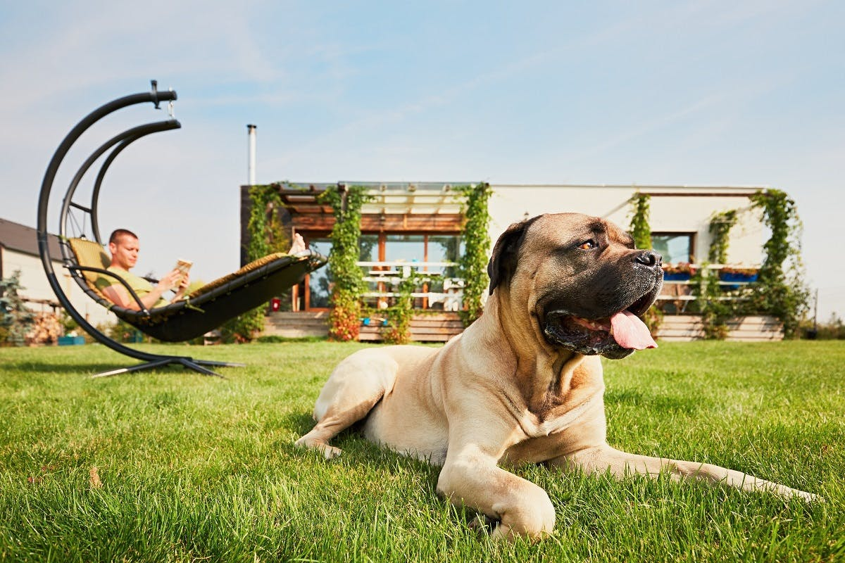 Dog relaxing in the yard in front of a house