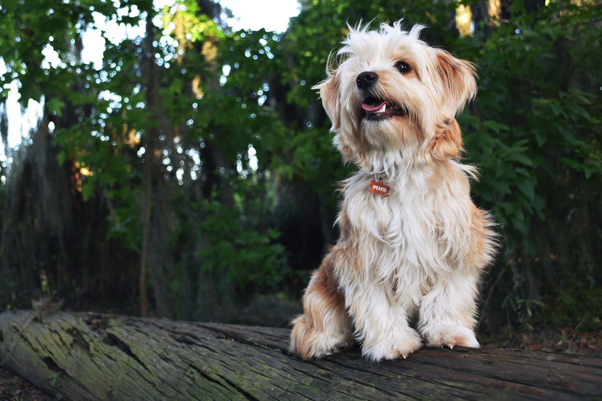 A dog sits outside on a wooden log