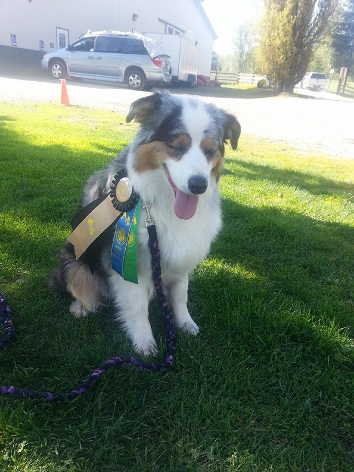 Sparrow the dog wearing ribbons