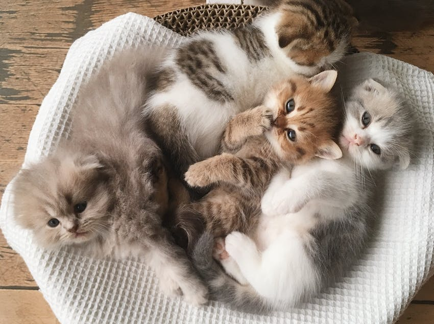 Four fuzzy kittens sleeping in a cat bed together