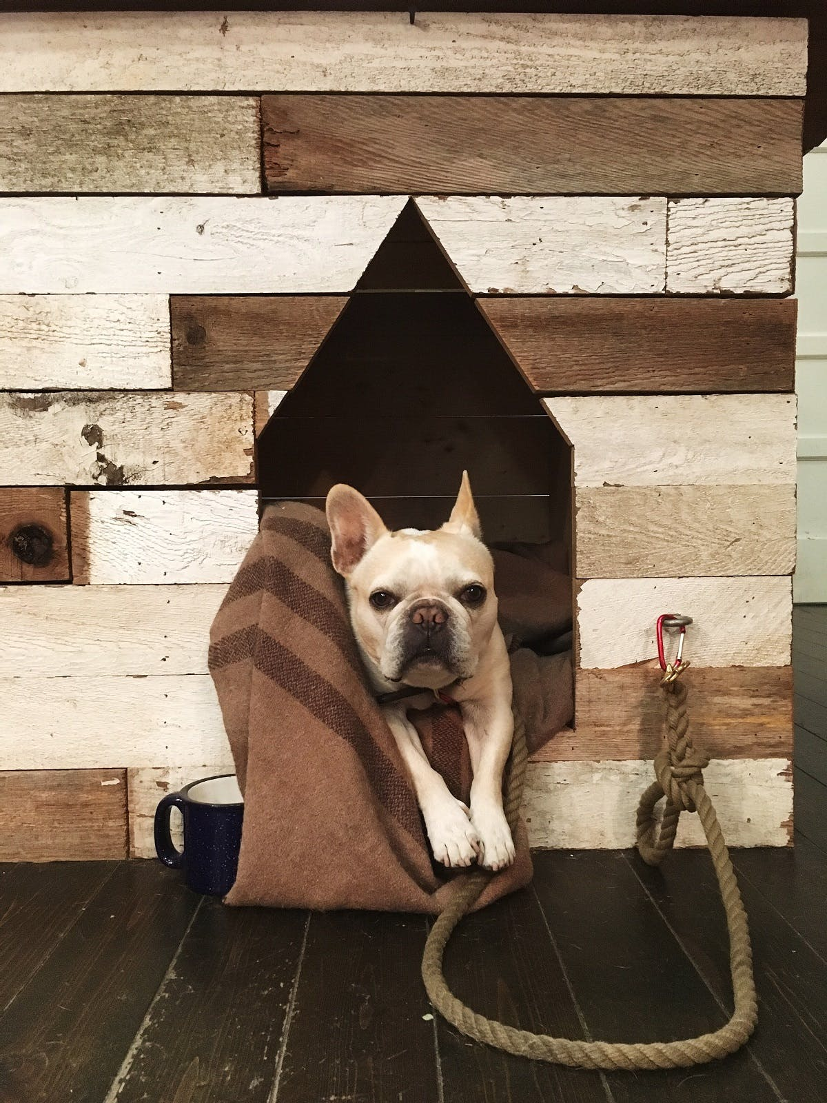 A French Bulldog sits on a blanket inside a doghouse