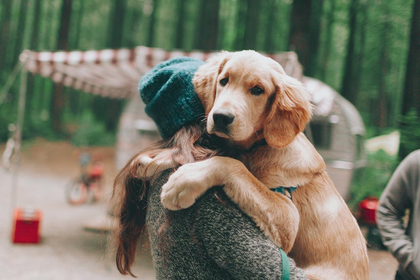 A girl wearing a beanie holds her cute Labrador Retriever dog at her campsite