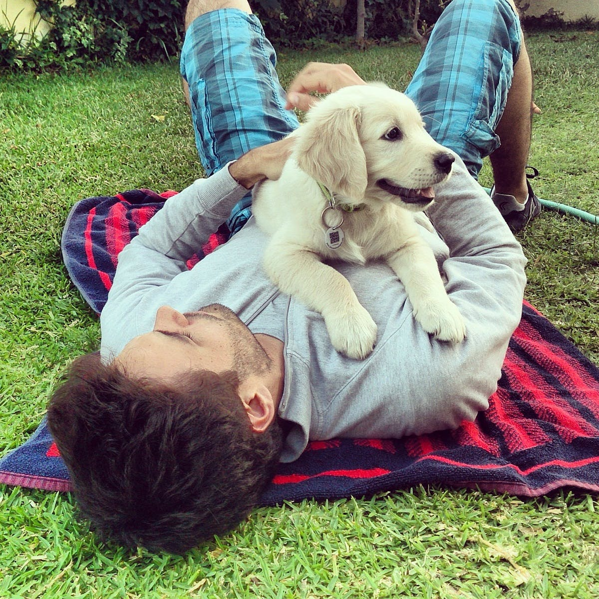 A man lying on a picnic blanket at the park cuddles his yellow Labrador puppy