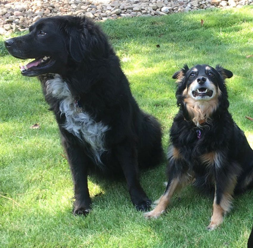 Photo of dogs Spencer and Salvatore