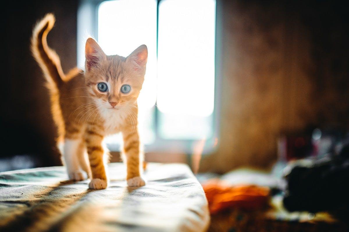 Orange kitten stands near sunlit window