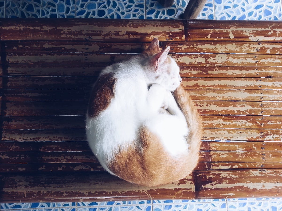Orange and white cat curled into a ball