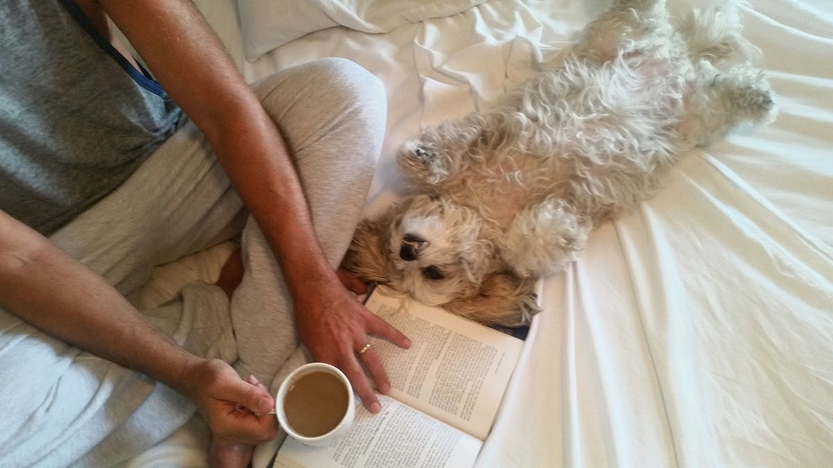 A man lounges in bed with his puppy, coffee and a book