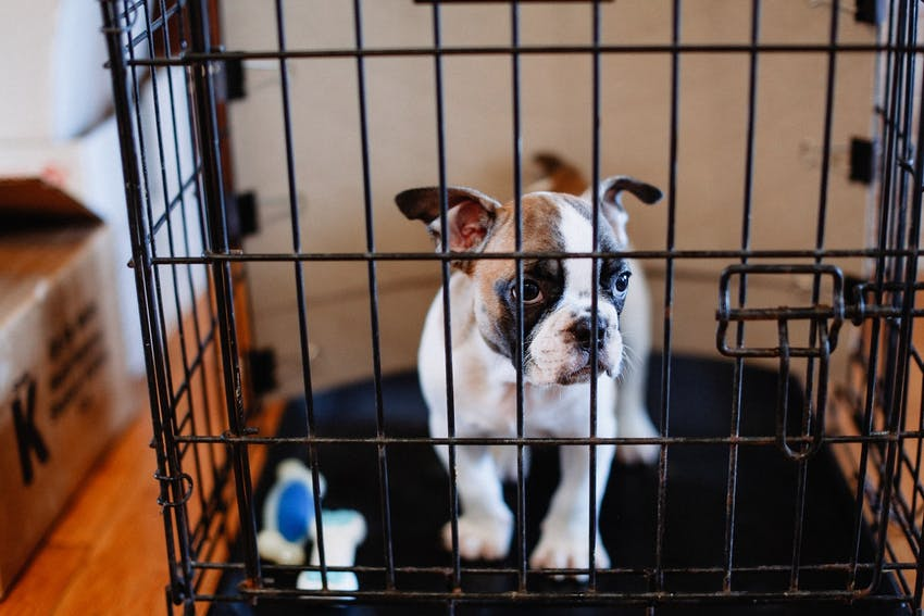 Puppy with toys in a crate for training