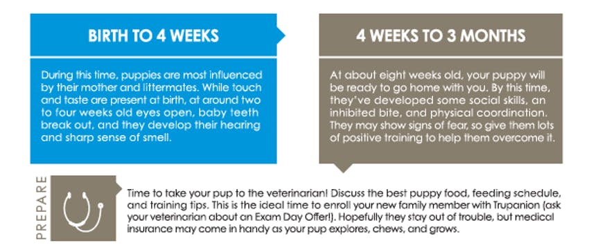 Puppy first year graphic - first few weeks