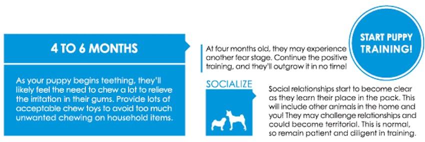 Puppy first year graphic - 4 to 6 months