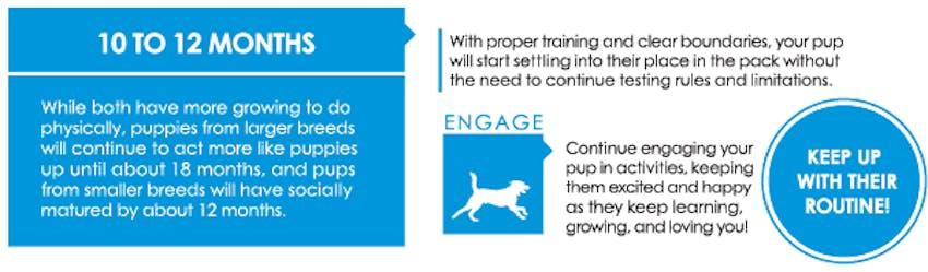 Puppy first year graphic - 9 to 12 months