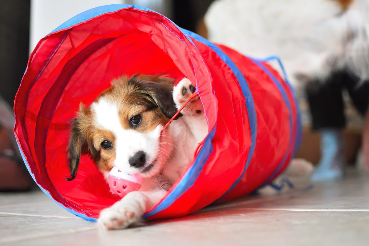 A puppy rolls around in an inflatable tube toy