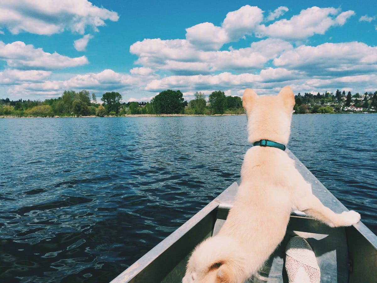 A fuzzy, tan dog looks out at the lake from a small boat