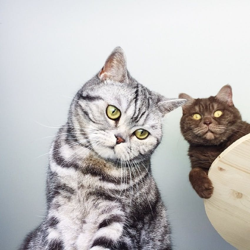 A grey & black striped cat and a brown cat with big eyes stare at the camera