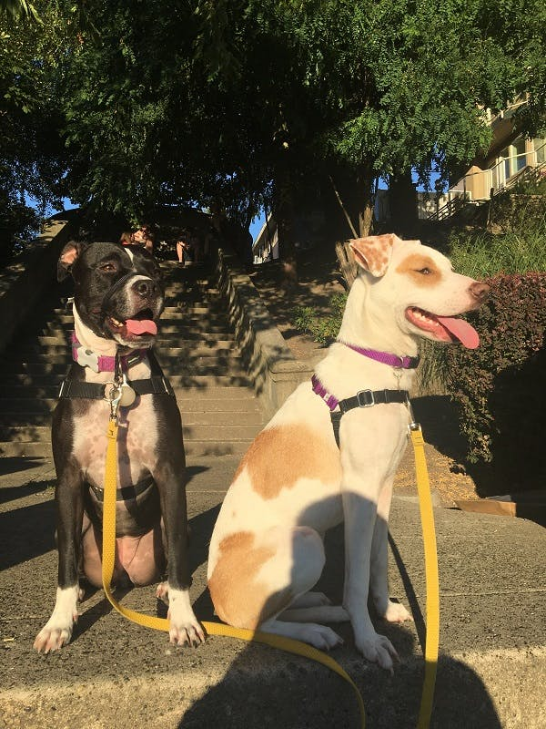 Two dogs sit on outdoor stairs wearing their leashes