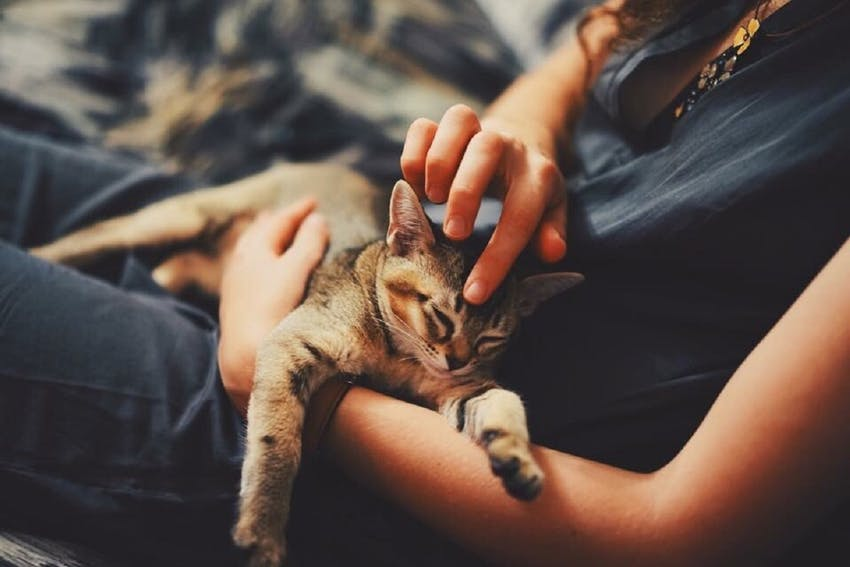 A woman holds and pets a soft cat in her lap
